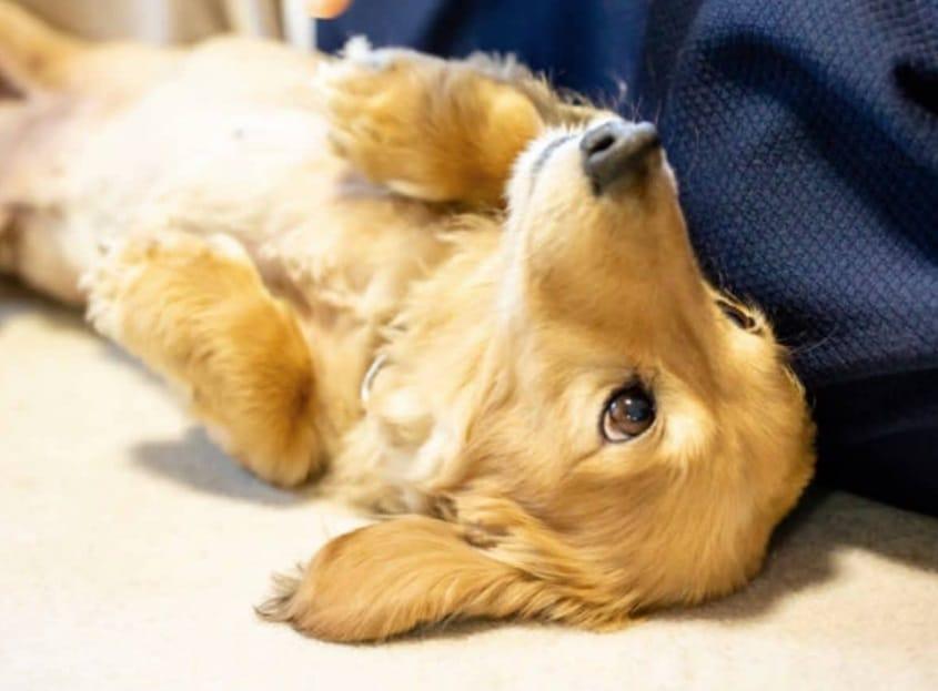 Un chien sur le dos
