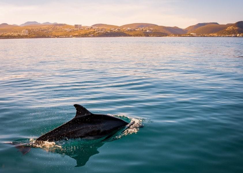 Un dauphin dans la mer